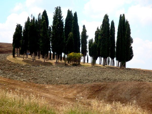 Tuscan Trees Famous Landscape
